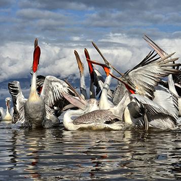 Birding & Nature Tours